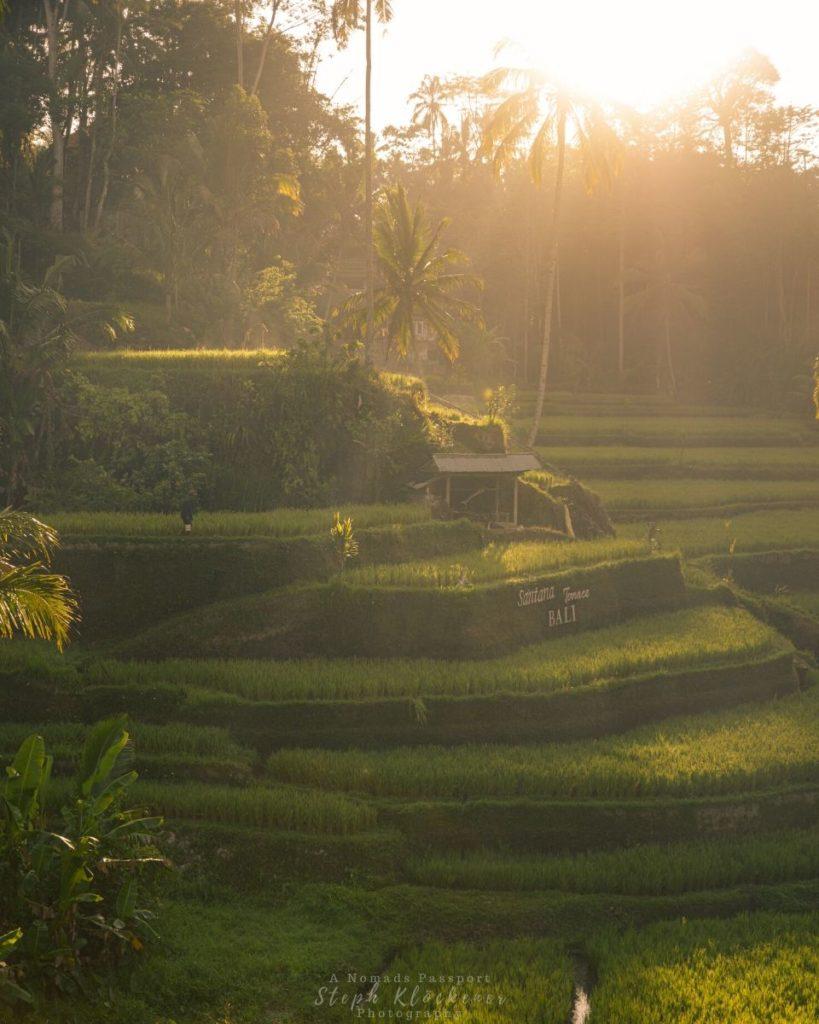Rice Terraces in Bali Indonesia