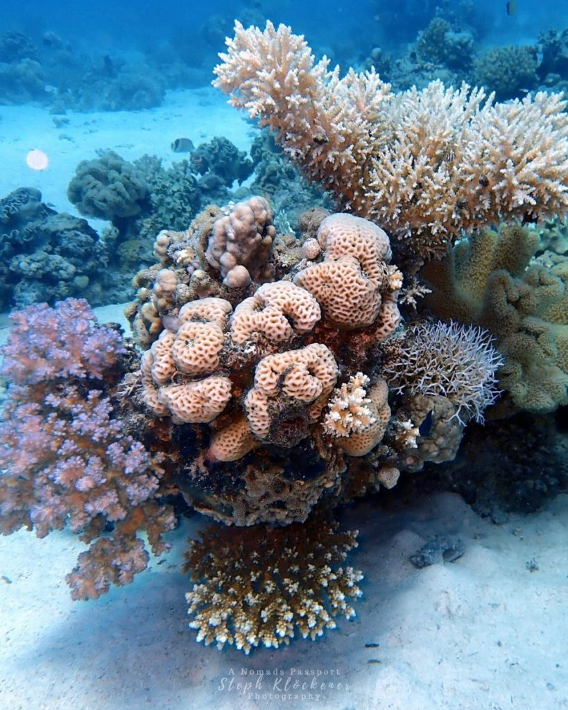 Explore Marine Reserves by Diving at Coral Reefs