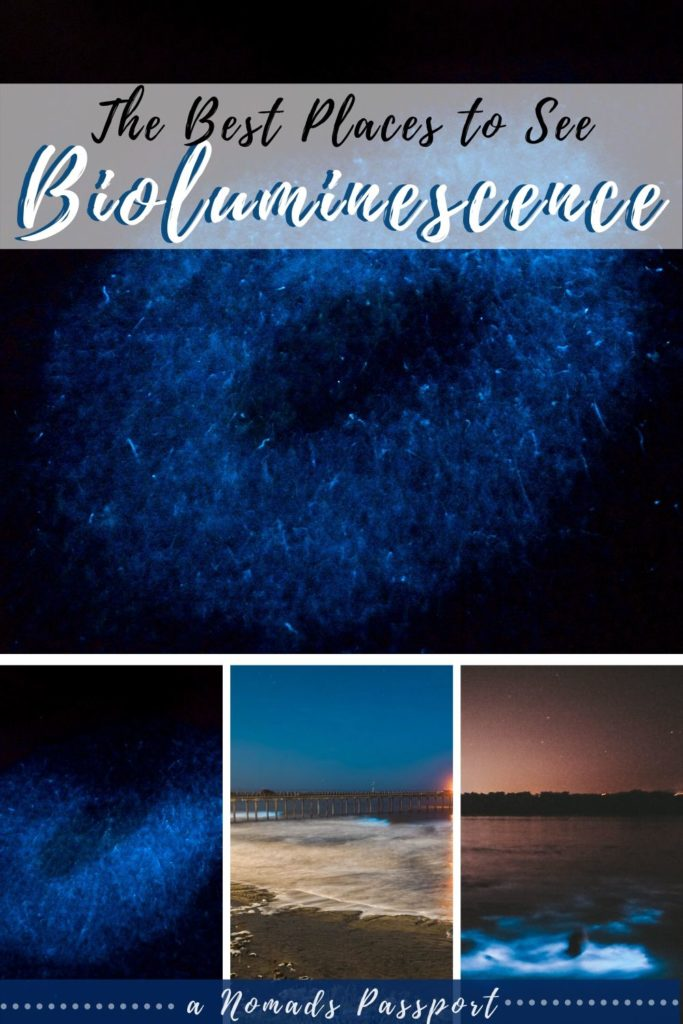 Best Places in the World to See Bioluminescence