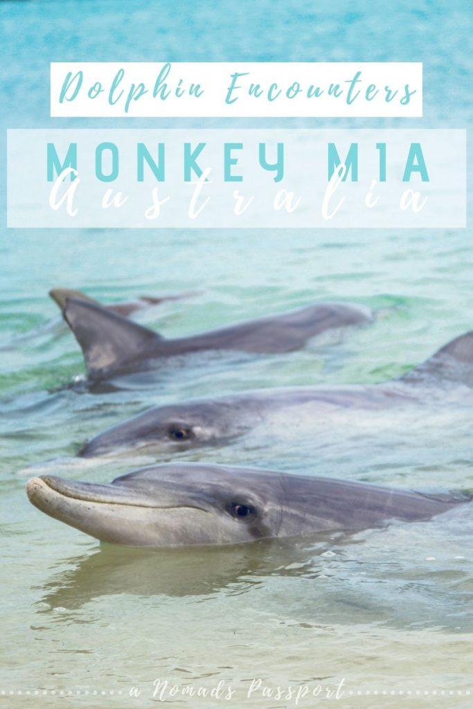 Dolphin Encounters Monkey Mia Australia