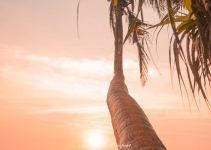 Daily Budget in Bali – How much do 13 Days on Bali cost?