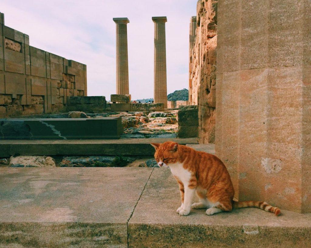 cat in front of ruins in Rhodes