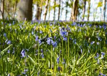 3 Magical Bluebell Forests in Germany