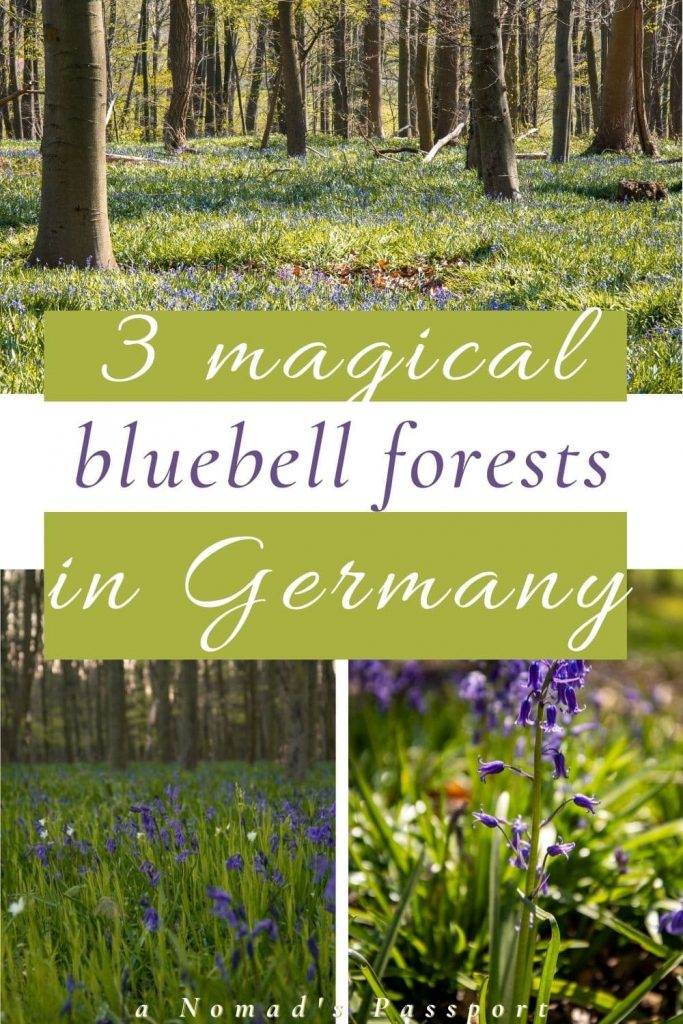 bluebell forests in Germany