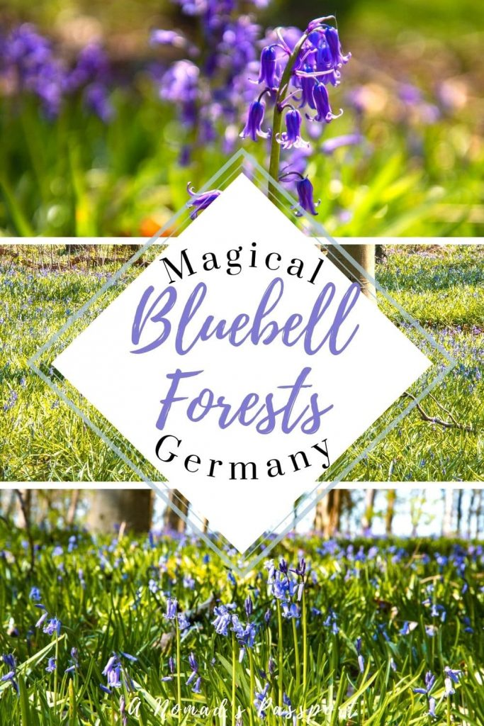 3 images of bluebells with the text 'Magical Bluebell Forests Germany'