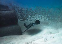Scuba Diving in Gran Canaria – Amazing dive sites